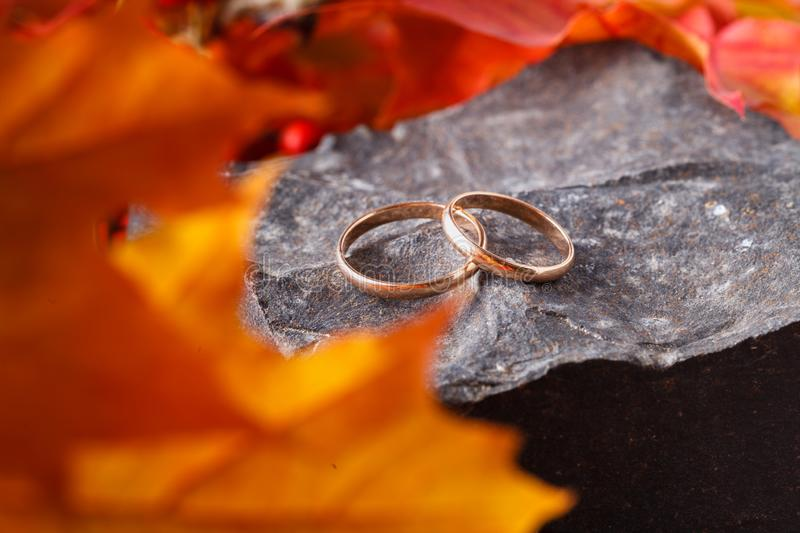 Two wedding-ring on old yellow foilage royalty free stock image