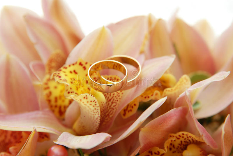 Download Two wedding rings stock image. Image of festive, ceremony - 21786361