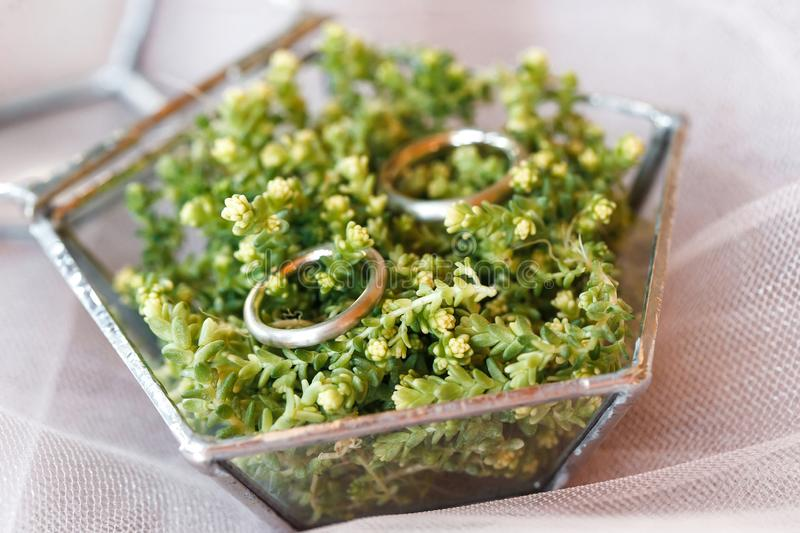 Two wedding rings are in the florarium stock photos