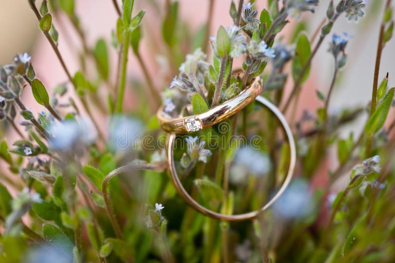Two wedding rings lying on the field flowers royalty free stock image