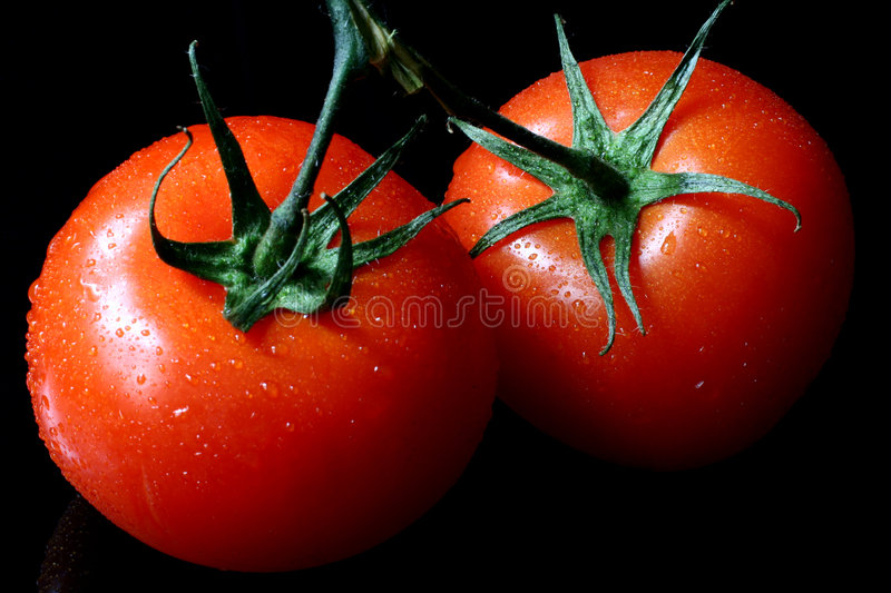 Two wet tomatoes stock photography