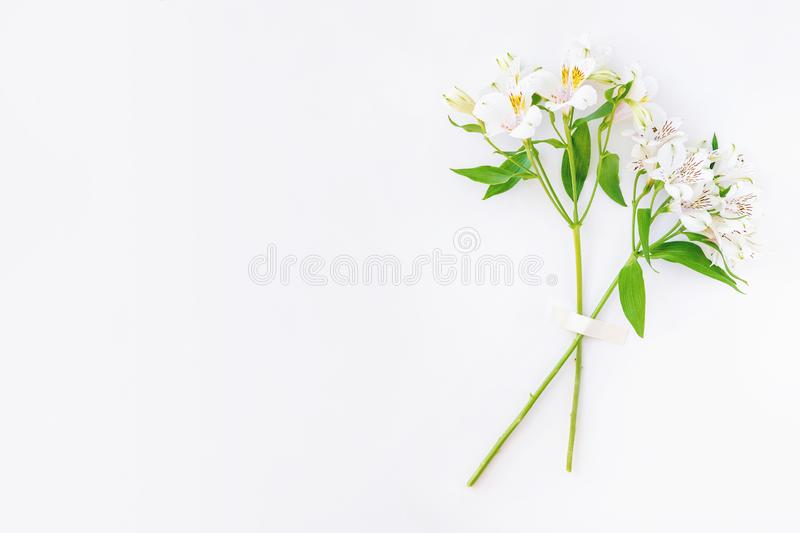 Two white alstroemeria flower branches taped on white background. With copy space. Trendy minimal concept. Flat lay, isolated fashion beauty top view beautiful royalty free stock image
