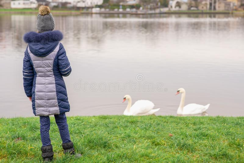 Two white swans waiting for food.Girl feeding two swans outdoor. Weekend activity royalty free stock photo