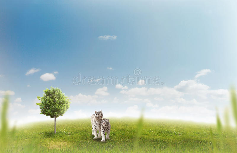 Download Two white tigers stock illustration. Image of nature - 22285743