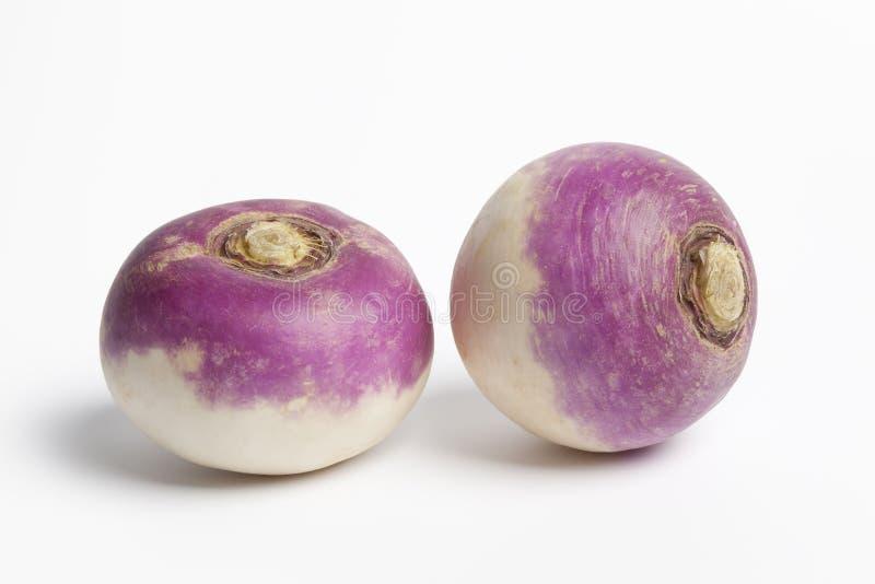 Two Whole Purple Headed Turnips Stock Photos