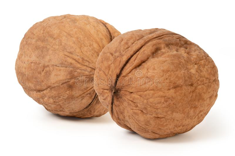 Two whole walnuts stock photo