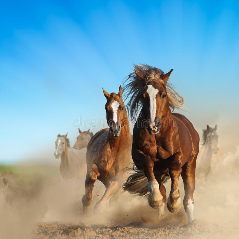 Two Wild Chestnut Horses Running Together Stock Image ... - photo#12