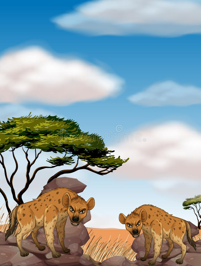 Two wild hyenas in the field. Illustration royalty free illustration
