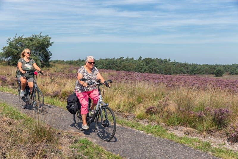 Two women cycling through blooming purple heath at Dutch Veluwe stock photo