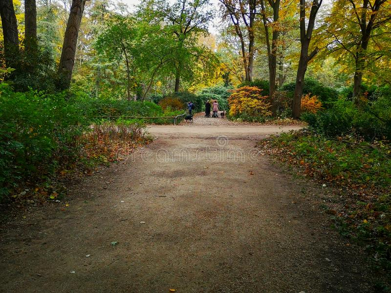 People enjoying beautiful urban nature in autumn Tiergarten park in Berlin, Germany. Two women with prams and a photographer with a black dog strolling and stock photos