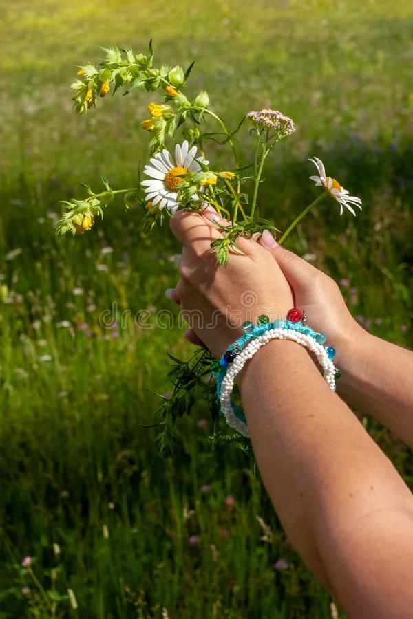 Two womens hands with beautiful homemade bracelets hold daisies on the background of the field on a sunny day. royalty free stock images