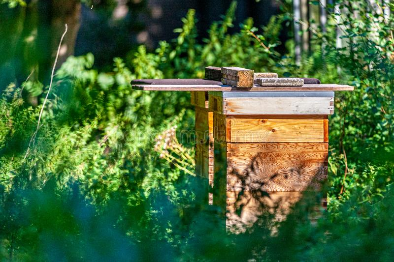 Two wooden hives among green vegetation and trees in the forest stock photos