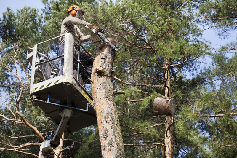 Two workers with a chainsaw trimming the tree branches. On the high Hydraulic mobile platform and cut down a tree stock image