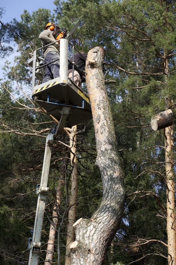 Two workers with a chainsaw trimming the tree branches. On the high Hydraulic mobile platform and cut down a tree stock photo