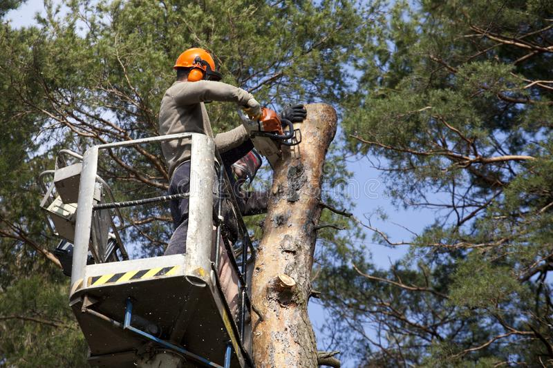 Two workers with a chainsaw trimming the tree branches. On the high Hydraulic mobile platform and cut down a tree royalty free stock photography