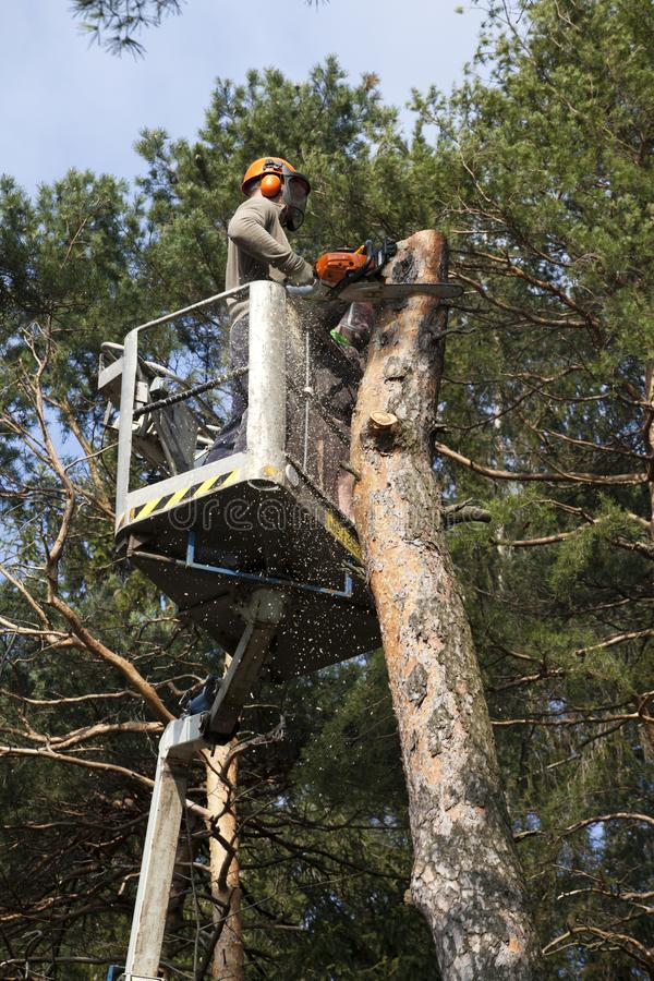 Two workers with a chainsaw trimming the tree branches. On the high Hydraulic mobile platform and cut down a tree stock images
