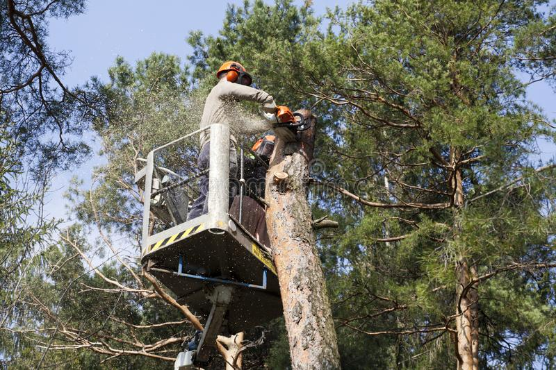 Two workers with a chainsaw trimming the tree branches. On the high Hydraulic mobile platform and cut down a tree stock photos
