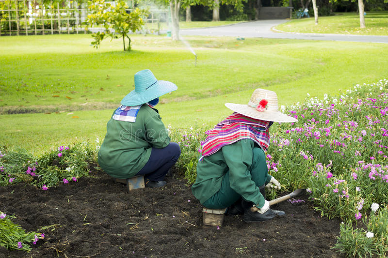 Two workers taking care of a flower garden. Two workers taking care of a flower patch in a public park stock photo