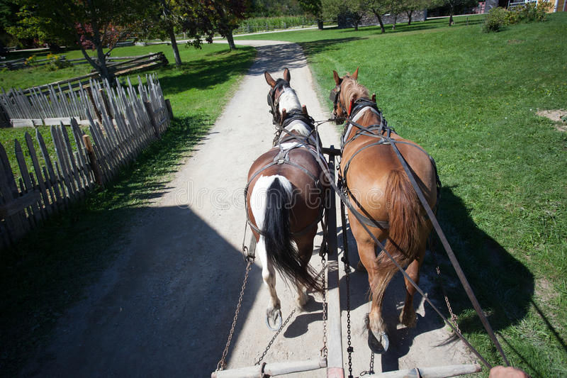 Two Working Horses. On a farm working hauling a trailer stock photography