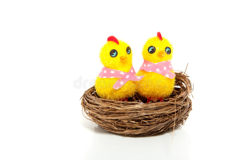 Two yellow easter chicks royalty free stock images
