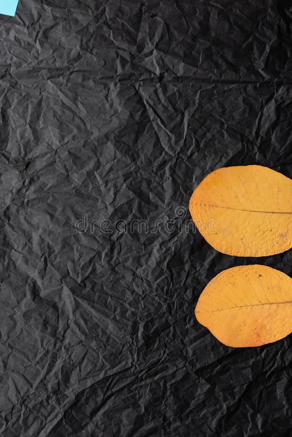 Two yellow leaf leaves on a black background. Picture of leaves stock images