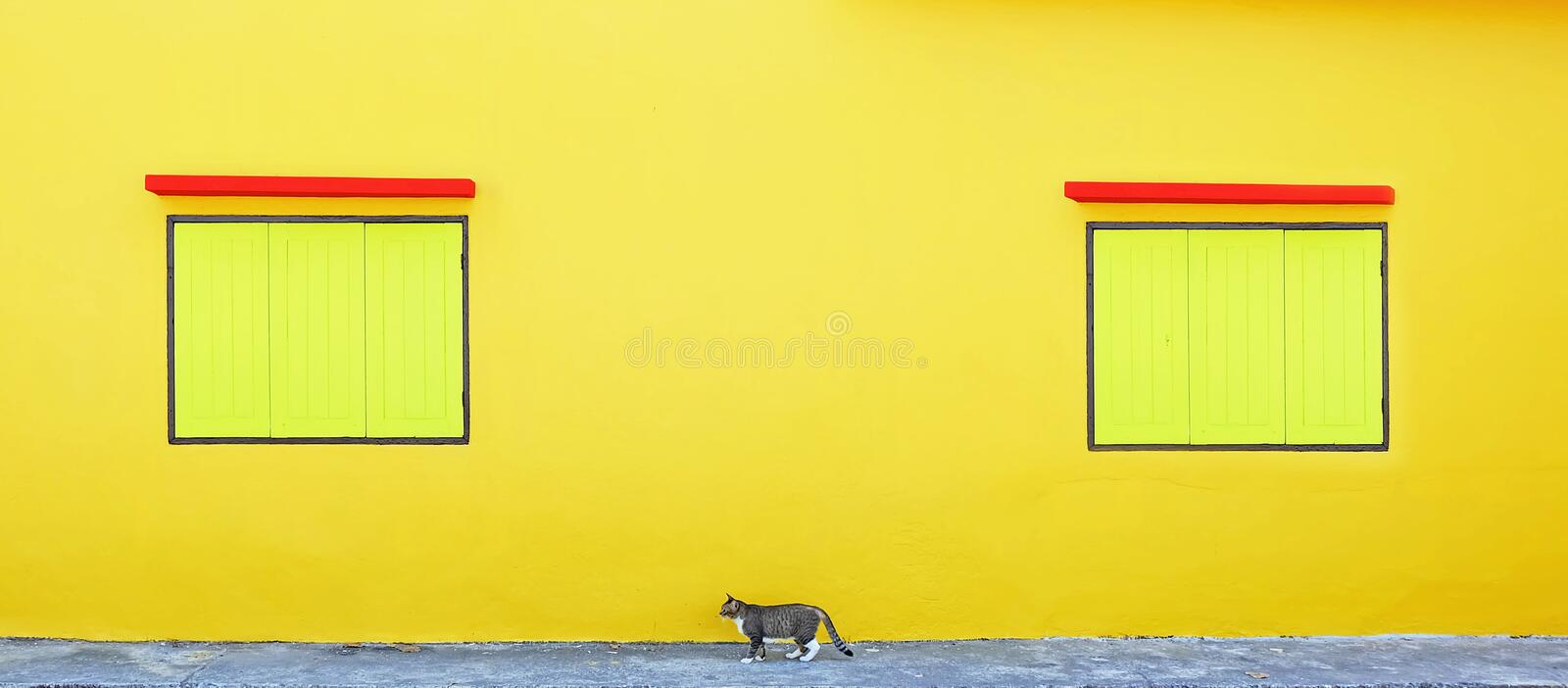 Two yellow window and a cat stock photo
