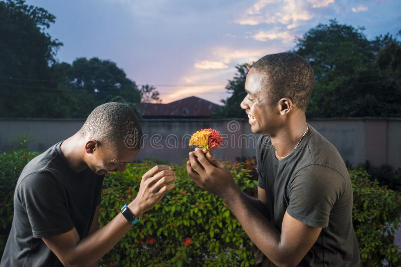 two young black gay couple laughing, one giving his partner flowers as a surprise stock image