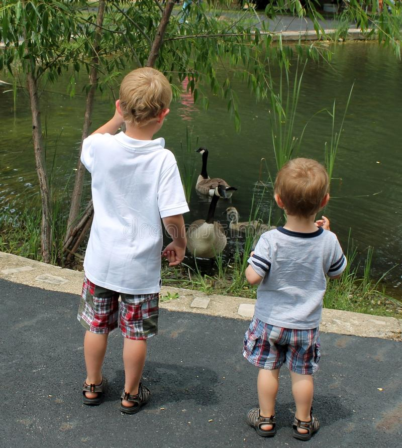 Free Two Young Boys Looking At Geese Swimming In A Pond Royalty Free Stock Photography - 43067397