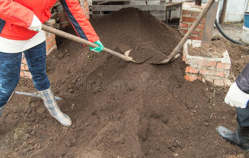 Two young farmer man and woman working in the garden, digging the soil with a shovel stock photo