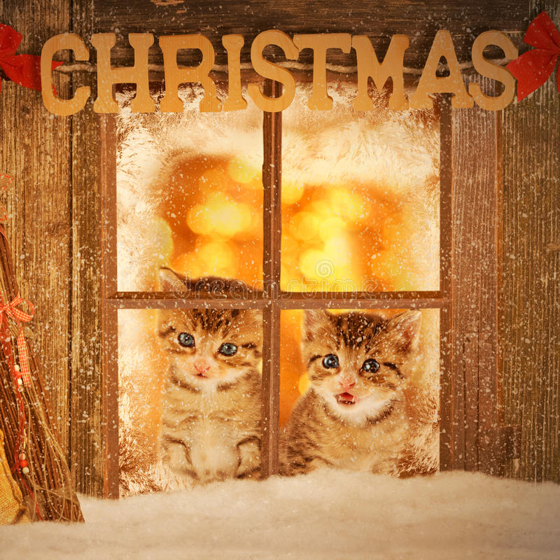 Two young kitten looking curiously out of a window. With christmas decoration royalty free stock photo