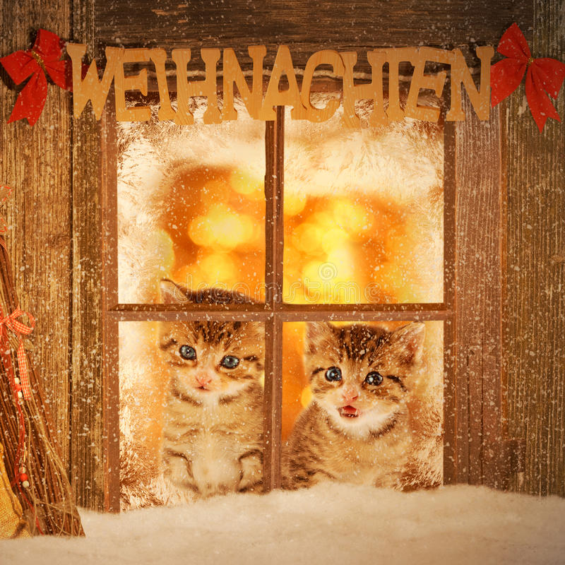 Two young kitten looking curiously out of a window. With christmas decoration royalty free stock photography