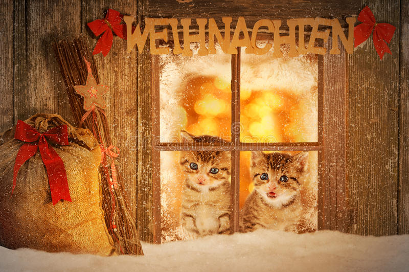 Two young kitten looking curiously out of a window. With christmas decoration stock images