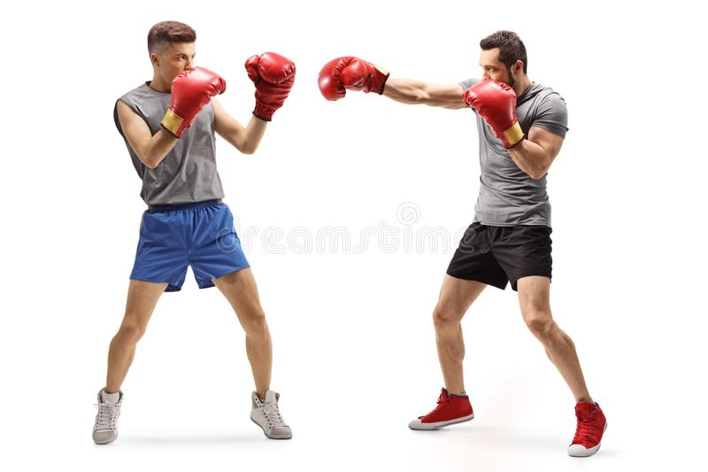 Two young men fighting with boxing gloves royalty free stock photo
