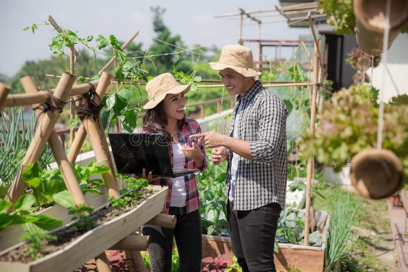 Male and female in the farm. Two young people in the farm discussing with laptop. urban farming concept royalty free stock photo