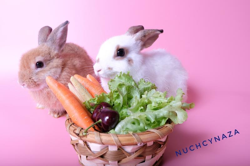 Two young rabbits, brown and white, close to fruits and vegetables royalty free stock photography