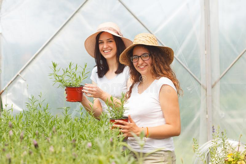 Two young women working together in a greenhouse royalty free stock photography