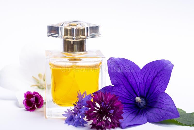 Tworzenie pachnidło esencja, lato kwiatów cukierki światła woń, pachnidło butelka i kolorowi aromatyczni kwiaty odizolowywający, zdjęcia royalty free