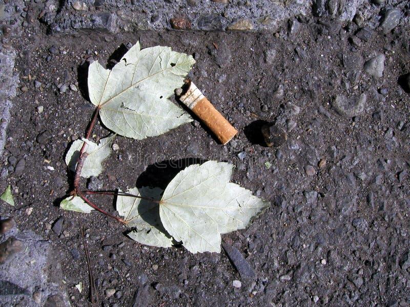 tyłek papierosa zdjęcia royalty free