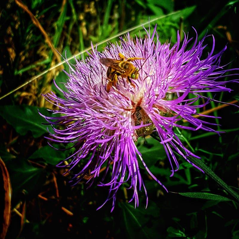 Ty jesteś pszczół kolanami fotografia royalty free