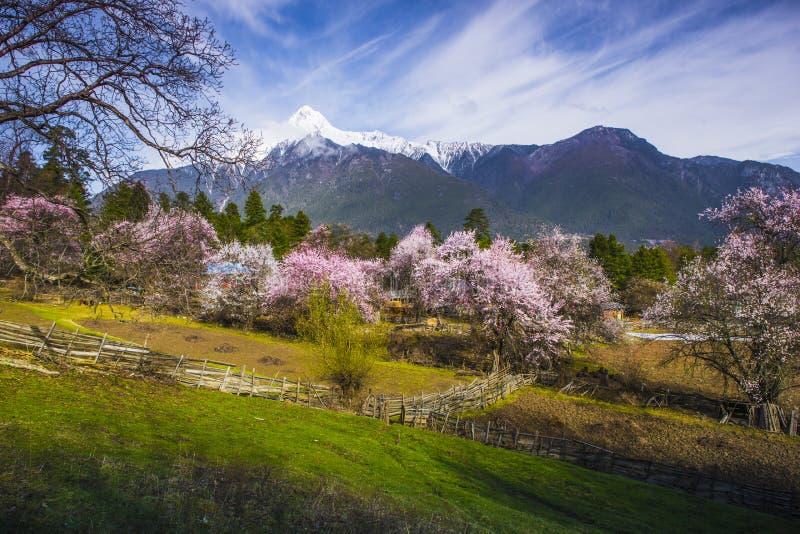 Tybet wiosna zdjęcia royalty free