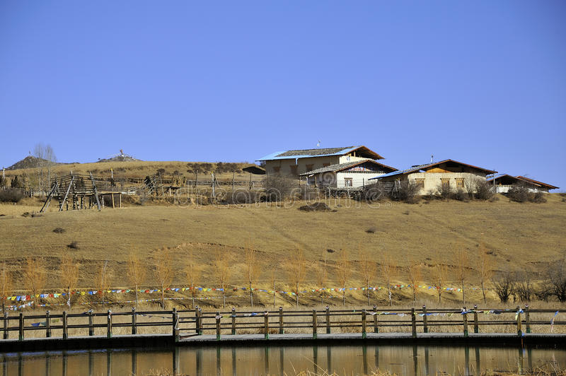 Tybetańczyk mieszkaniowy obrazy stock