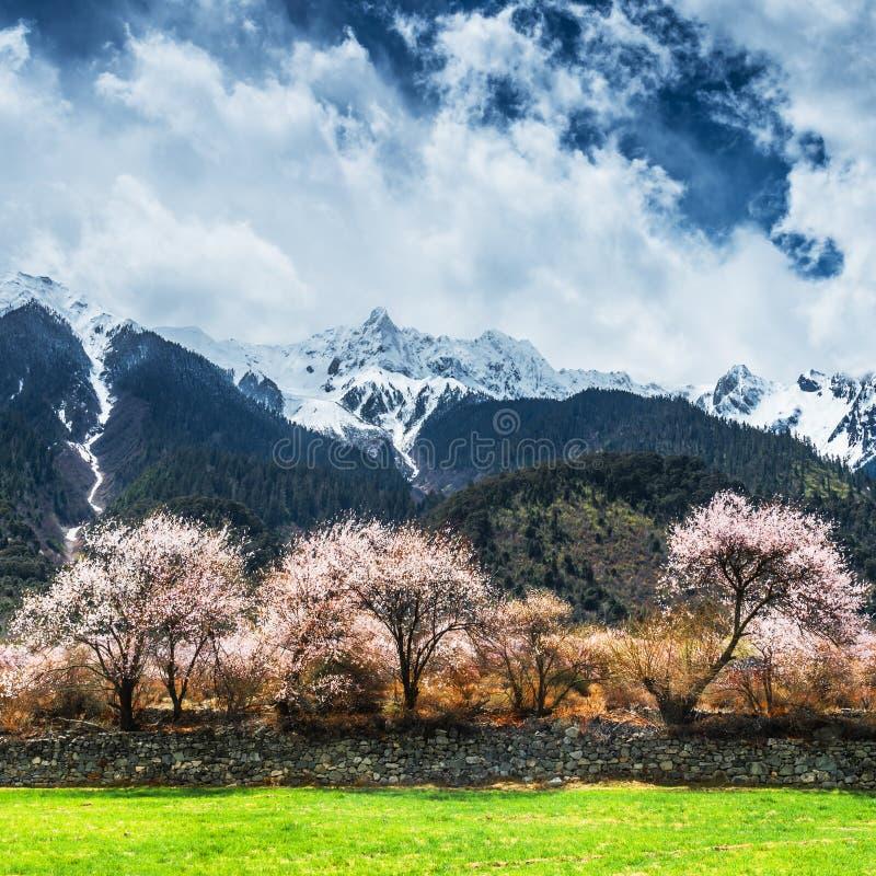 Tybetański krajobraz fotografia royalty free
