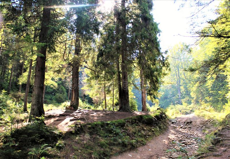 Tyck om ditt lopp med Carpathians berg, skönhet av byn royaltyfri bild