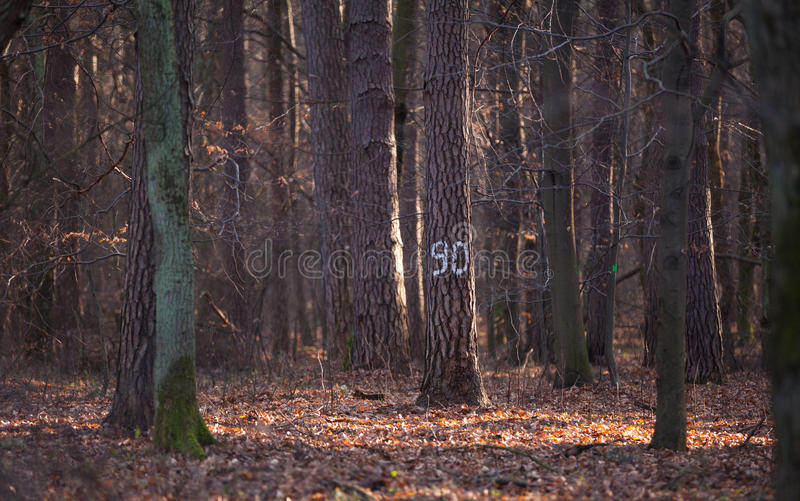 tydlig tree arkivfoto