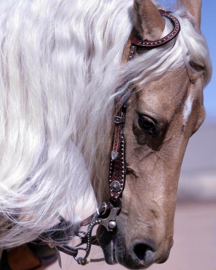 tygla för hästpalamino royaltyfri fotografi