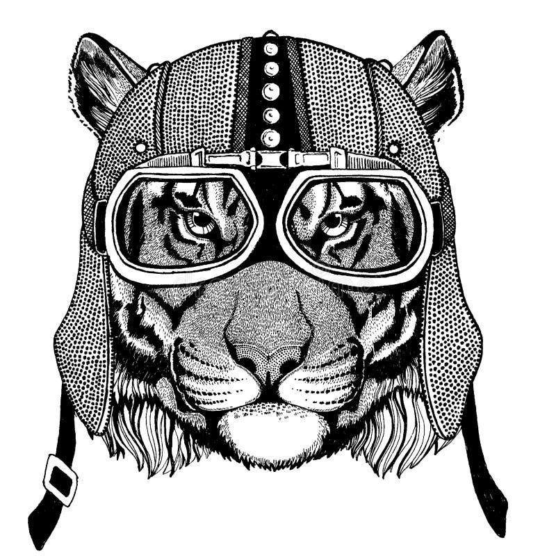 Tygrys, dziki kota dzikie zwierzę jest ubranym motocykl, aero hełm Rowerzysta ilustracja dla koszulki, plakaty, druki ilustracji