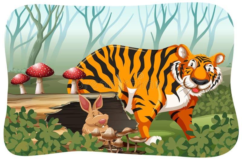 Tygrys w dżungli royalty ilustracja