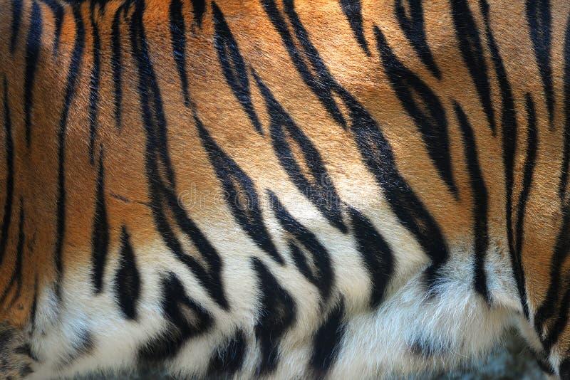 Tygrysi Futerkowy lampasa wzoru tło zdjęcie royalty free