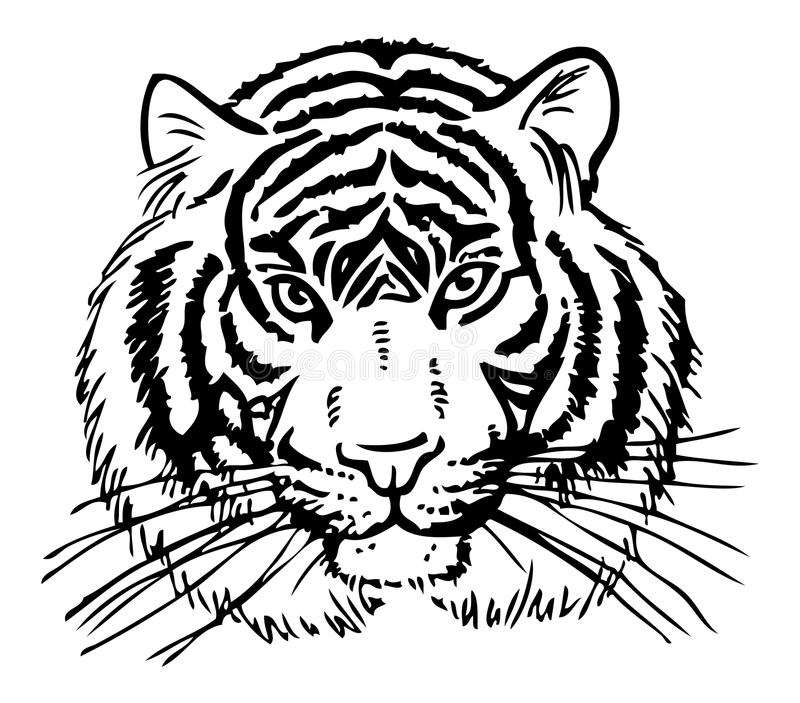 Tygrysi obrazek ilustracji