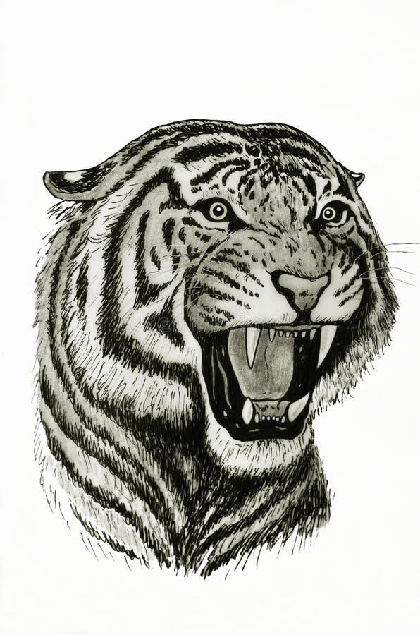 Tygrysi poryk ilustracji